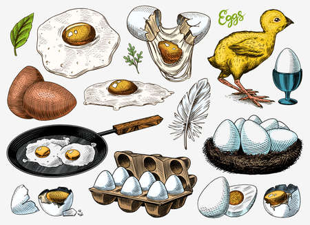 Eggs and chick, farm product, scrambled omelette, packing and nest. Engraved hand drawn vintage sketch. Woodcut style. Vector illustration for menu or poster.