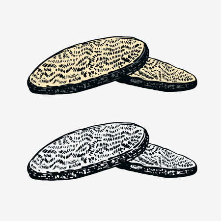 Truffles mushrooms. Engraved hand drawn vintage sketch. Ingredients for cooking food. Woodcut style. Vector illustration.