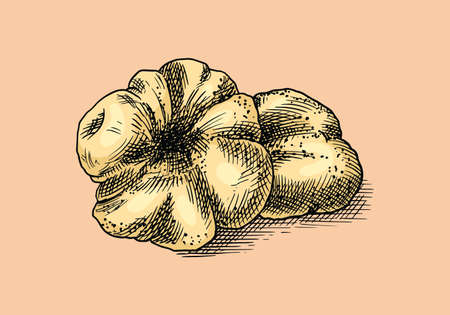 Truffles mushrooms badge or logo. Engraved hand drawn vintage sketch. Ingredient for cooking food. Woodcut style. Vector illustration.