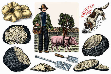 Truffles mushrooms set. Hog and Lagotto Romagnolo dog. Engraved hand drawn vintage sketch. Ingredients for cooking food. Woodcut style. Vector illustration.