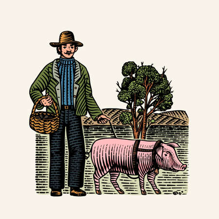Hog and farmer for locating truffles mushrooms. Domestic pig . Engraved hand drawn vintage sketch. Woodcut style. Vector illustration. Ilustrace