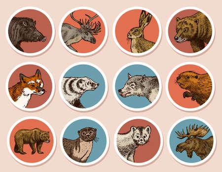 Wild animals stickers in vintage style. Forest Deer Beaver Elk Wolf Bear Fox Marten Badger Boar Hare. Retro monochrome badge or label. Northern European Beasts. Hand drawn sketch. 矢量图像
