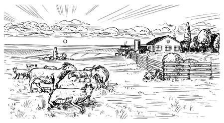 Rural meadow. A village landscape with sheep, hills and a farm. Sunny scenic country view. Hand drawn engraved sketch. Vintage rustic banner for wooden sign or badge or label. Illustration