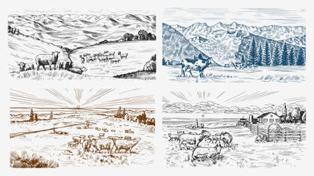 Rural meadow set. A village landscape with sheep, hills and a farm. Sunny scenic country view. Hand drawn engraved sketch. Vintage rustic banner for wooden sign or badge or label. Illustration