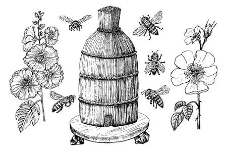 Bee and Honey. Mead and insect and floral and Beekeeping. Honeycomb and hive Vector Engraved hand drawn Vintage old sketch for t-shirt or typography or badge. Vector illustration