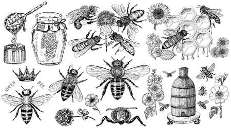 Bee and Honey set. Mead and insect and floral and Beekeeping. Honeycomb and hive Vector Engraved hand drawn Vintage old sketch for t-shirt or typography or badge. Vector illustration