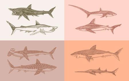 Sharks set.Great white shark, Sixgill sawshark. Basking Sand Tiger Hammerhead Thresher Atlantic Bull Mackerel Whale Blue sharks. Marine fish. Sea life. .