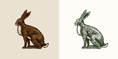 Wild hare or brown rabbit sits. European Bunny or cowardly coney. Hand drawn engraved old animal sketch for T-shirt, tattoo or label or poster. Vector illustration.