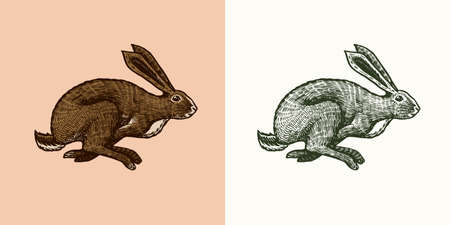 Wild hare or rabbit is jumping. Cute Bunny or coney runs away. Hand drawn engraved old sketch for T-shirt, tattoo or label or poster. Animal is running. Vector illustration. Ilustrace