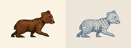 Grizzly little bear in vintage style. Brown wild animal. Side view. Hand drawn engraved old sketch for T-shirt, tattoo or label or poster. Vector illustration.