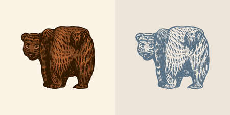 Grizzly bear in vintage style. Brown wild animal. Side view. The beast looks back. Hand drawn engraved old sketch for T-shirt, tattoo or label or poster. Vector illustration.
