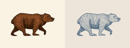 Grizzly bear in vintage style. Brown wild animal. Side view. Hand drawn engraved old sketch for T-shirt, tattoo or label or poster. Vector illustration. Ilustrace