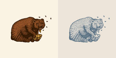 Grizzly Brown Bear eats honey. In a wild animal in the paw a beehive with bees. Side view. Hand drawn engraved old sketch for T-shirt, tattoo or label or poster. Vector illustration in vintage style.