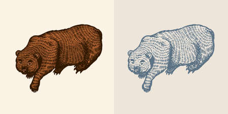 Grizzly bear in vintage style. Brown wild animal. The beast is playing. Hand drawn engraved old sketch for T-shirt, tattoo or label or poster. Vector illustration. Ilustrace