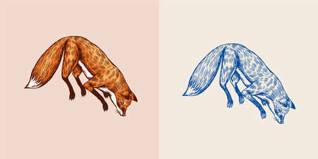 Soaring fox. Wild forest red animal jumping up. Food search concept. Vintage style. Engraved hand drawn sketch.