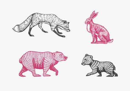 Forest animals. Bear Grizzly and red Fox. Jumping beasts. Vector Engraved hand drawn Vintage sketch for label or poster.