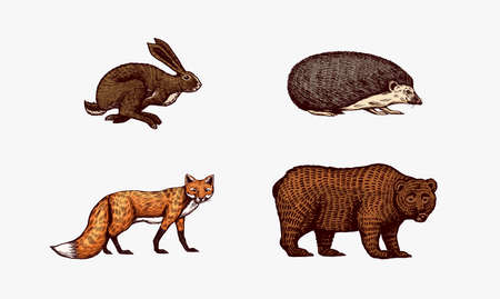 Forest animals. Bear Grizzly and red Fox, Hare and Hedgehog. Jumping beasts. Vector Engraved hand drawn Vintage sketch for label or poster.
