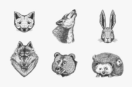 Forest animals. Bear Grizzly, Wolf and red Fox, Hare and Hedgehog and Seal. The face of the beasts. Close up. Vector Engraved hand drawn Vintage sketch for label or poster. Ilustrace