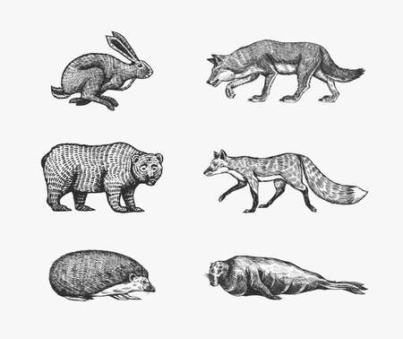 Forest animals. Bear Grizzly, Wolf and red Fox, Hare and Hedgehog and Seal. Jumping beasts. Vector Engraved hand drawn Vintage sketch for label or poster.
