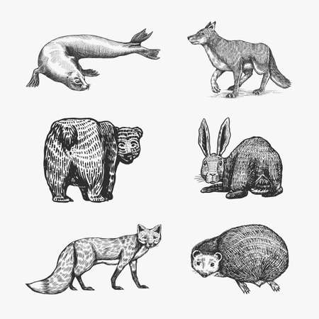 Forest animals. Bear Grizzly, Wolf and red Fox, Hare and Hedgehog and Seal. Beasts look back. Vector Engraved hand drawn Vintage sketch for label or poster. Ilustrace