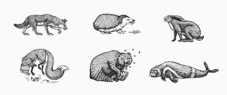 Forest animals. Bear Grizzly, Wolf and red Fox, Hare and Hedgehog and Seal. Beasts eat concept. Vector Engraved hand drawn Vintage sketch for label or poster.