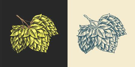 Hops and Barley. Malt Beer. Engraved vintage set. Hand drawn collection. Sketch for web or pub menu. Design elements isolated on white background.