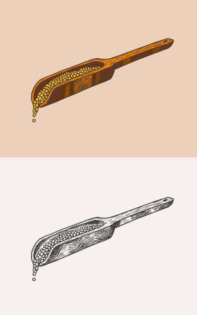 Mustard seeds or Spicy condiment. Wooden spatula or spoon. Illustration for Vintage background or poster. Engraved hand drawn sketch. Ilustrace