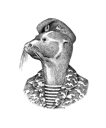 Fur seal man in military uniforms. Marine mammal. Fashion animal character. Hand drawn sketch. Engraved illustration for and T-shirts or tattoo. Victorian seafarer or voyager or navigator.
