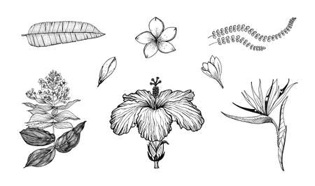 Palm plant, Strelitzia, Hibiscus, Plumeria, Medinilla. Flowering plants. Tropical or exotic leaves and leaf. Vintage fern. Engraved flowers. Hand drawn. Botanical background.