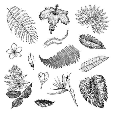 Palm plant, Strelitzia, Hibiscus, Plumeria, Medinilla, Monstera. Flowering plants. Tropical or exotic leaves and leaf. Vintage fern. Engraved flowers. Hand drawn. Botanical background. Banque d'images