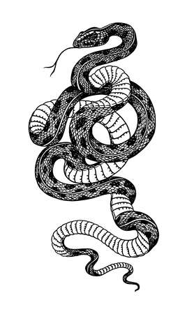 Pit viper. Crotaline snake or pit adders. Venomous Reptilia illustration. Engraved hand drawn in old sketch, vintage style for sticker and tattoo. Vettoriali