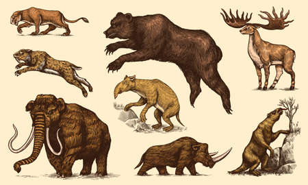 Mammoth or extinct elephant, Woolly rhinoceros Cave bear lion. Panthera Saber toothed tiger, Irish elk or deer, Ground sloth, Megatheriidae. Vintage animal. Retro Mammals. Hand drawn engraved sketch. Vektorové ilustrace