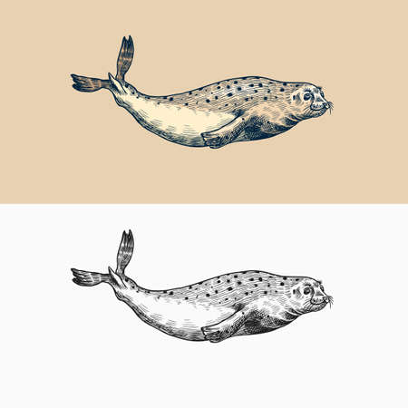 Harbor seal. Marine creatures, nautical animal or pinnipeds. Vintage retro signs. Doodle style. Hand drawn engraved sketch  イラスト・ベクター素材