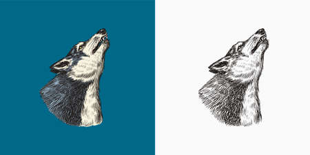 Gray wolf howling. A predatory beast. Wild forest animal. Vector Engraved hand drawn Vintage old sketch for stamp, t-shirt or typography or badge.  イラスト・ベクター素材