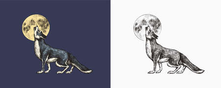 Gray wolf howling. A predatory beast and the moon. Wild forest animal. Vector Engraved hand drawn Vintage old sketch for stamp, t-shirt or typography or badge.