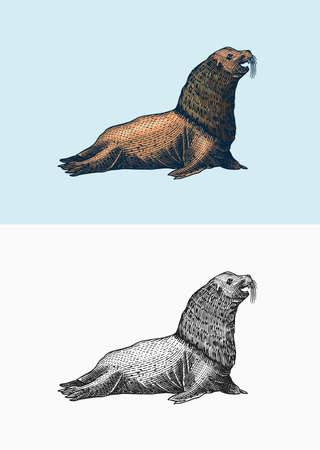 Steller sea lion. Marine creatures, nautical anima. Fur seall or pinnipeds. Vintage retro signs. Doodle style. Hand drawn engraved sketch