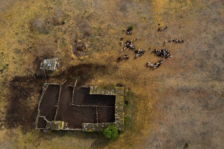 Aerial view on the sheep herd. Natural composition with animals and their sheepfold