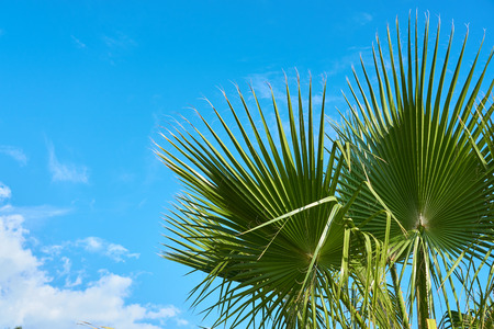 Palm tree against a blue cloudy sky in daylight.