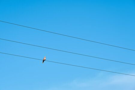 A dove sitting on the cable against a clear blue sky.