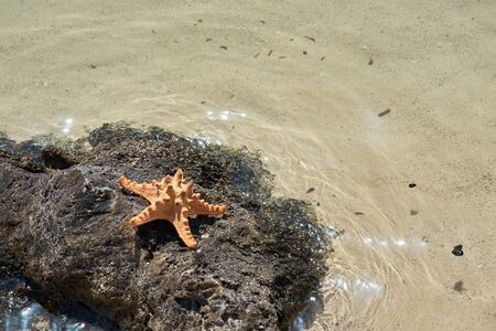 Starfish on the rock with clear sea water glittering on a background. Copy space. Reklamní fotografie - 129930107