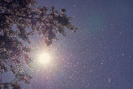 Poplar fluff flying in the sun as a background. Foto de archivo