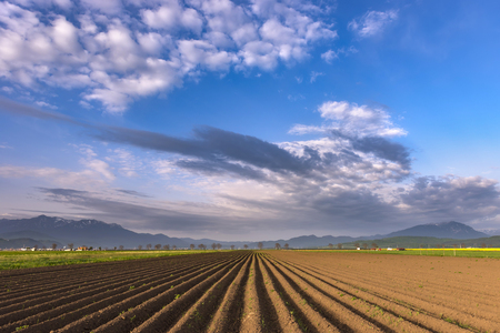 the arable land: Plowed field of crops in the spring morning light, prepared to be sown, with beautiful misty mountains in the background