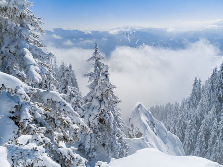 Winter Christmas scenic snow landscape background, with spruce trees in the foreground, sea of clouds and misty mountain peaks far behind. Archivio Fotografico