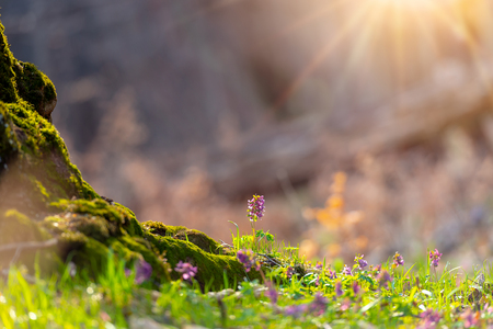 Scenic spring flowers background with magical shinning sun and flowing particles, over a blurred background with soft focus highlights. Natural ladscape backdrop with copy space for cards. Stok Fotoğraf