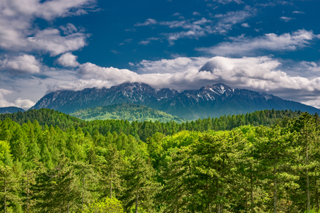 Magnificent panoramic view of the coniferous forest on the mighty Carpathians Mountains and beautiful blue cloudy sky background. Natural summer green and blue landscape. 免版税图像