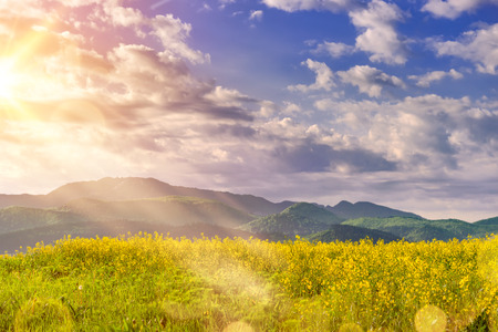 Beautiful sunrise in a spring morning over a colorful bright yellow rapeseed Brassica napus crop filed, with dramatic cloudy sky, enhanced sun light rays and mountains in the background.