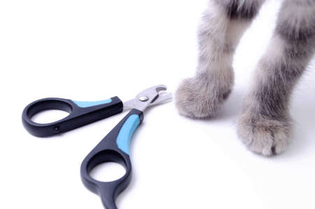 Cat claw scissors for cats with black and blue handle on a white background in macro. Cat paw touches the scissors. Cat sniffs scissors for claws. Standard-Bild