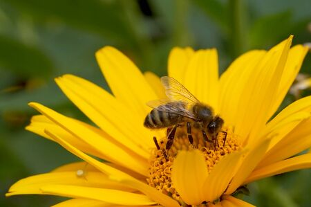 the bee drinks works in a flower and pollinates it