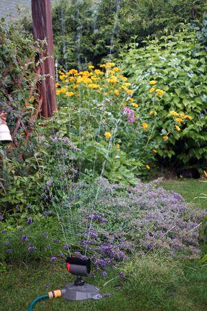 Watering the garden in summer Stok Fotoğraf