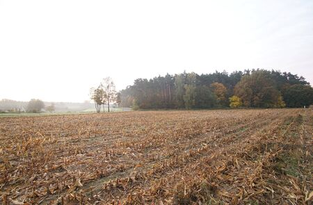 plowed corn field in the morning, autumn, Poland, Europe Stock Photo
